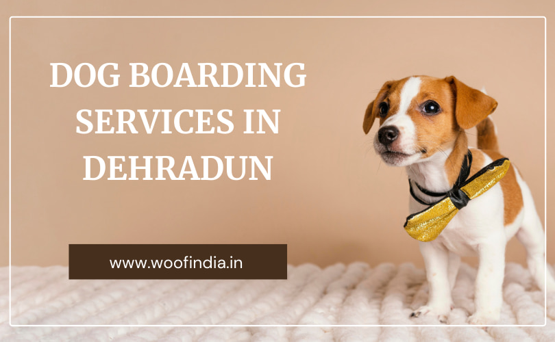 Dog Boarding Services In Dehradun   Woof India